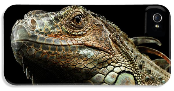 Closeup Green Iguana Isolated On Black Background IPhone 5 Case by Sergey Taran