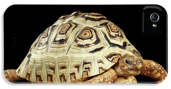 Closeup Leopard Tortoise Albino,stigmochelys Pardalis Turtle With White Shell On Isolated Black Back IPhone 5 Case by Sergey Taran
