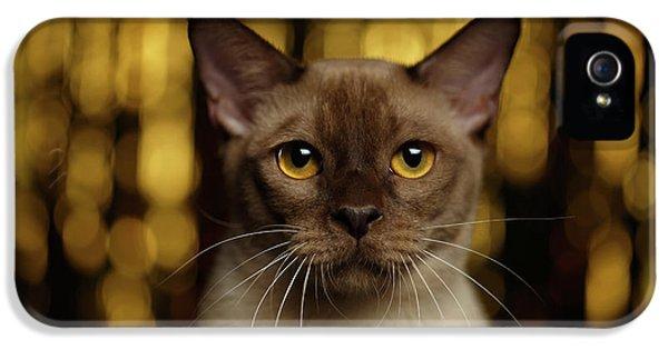 Cat iPhone 5 Case - Closeup Portrait Burmese Cat On Happy New Year Background by Sergey Taran