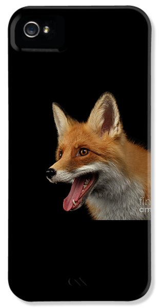 Closeup Portrait Of Smiled Red Fox Isolated On Black  IPhone 5 Case by Sergey Taran