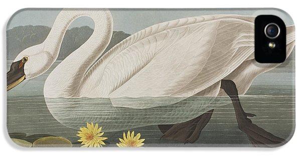 Common American Swan IPhone 5 Case