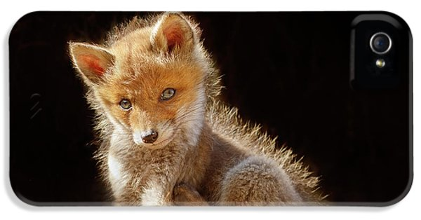 Cute Baby Fox IPhone 5 Case by Roeselien Raimond