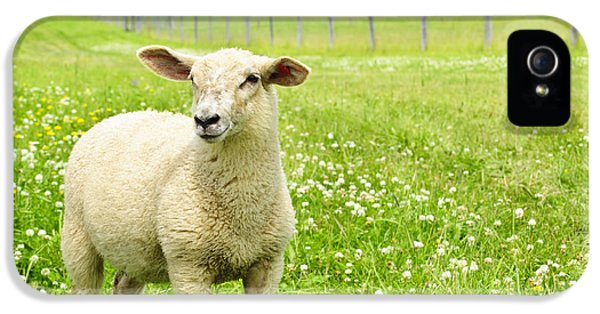 Rural Scenes iPhone 5 Case - Cute Young Sheep by Elena Elisseeva