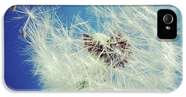Blue iPhone 5 Case - Dandelion And Blue Sky by Matthias Hauser