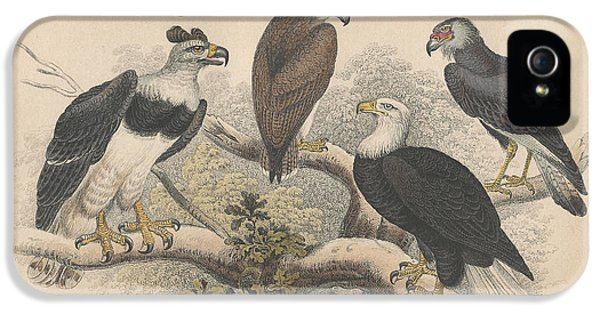 Harpy Eagle iPhone 5 Case - Eagles by Dreyer Wildlife Print Collections