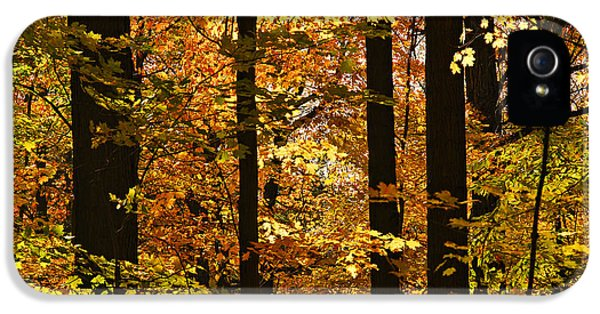 Fall Forest IPhone 5 Case by Elena Elisseeva