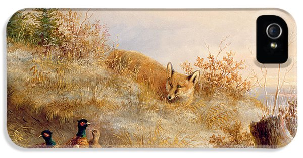 Fox And Pheasants In Winter IPhone 5 Case by Anonymous