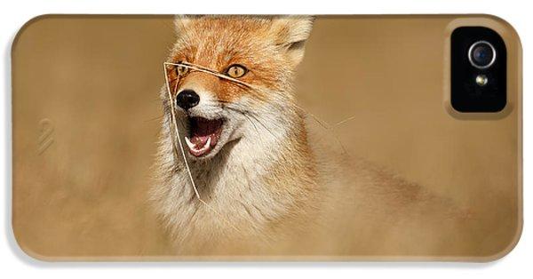 Funny Fox IPhone 5 Case