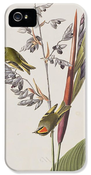Golden-crested Wren IPhone 5 / 5s Case by John James Audubon