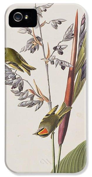 Golden-crested Wren IPhone 5 Case by John James Audubon