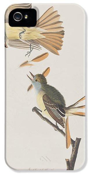 Great Crested Flycatcher IPhone 5 Case by John James Audubon