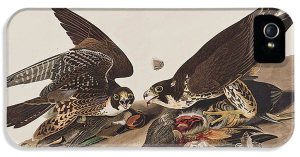 Great-footed Hawk IPhone 5 Case by John James Audubon