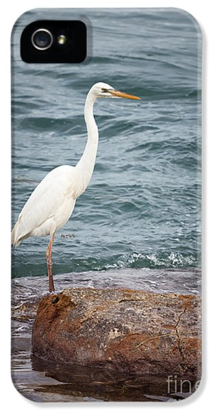 Great White Heron IPhone 5 Case by Elena Elisseeva