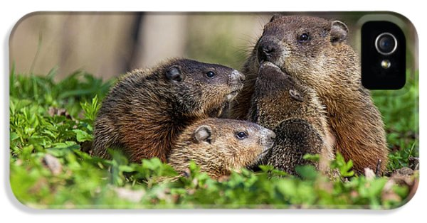 Happy Family IPhone 5 / 5s Case by Mircea Costina Photography