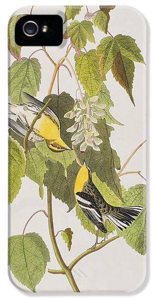 Hemlock Warbler IPhone 5 Case by John James Audubon