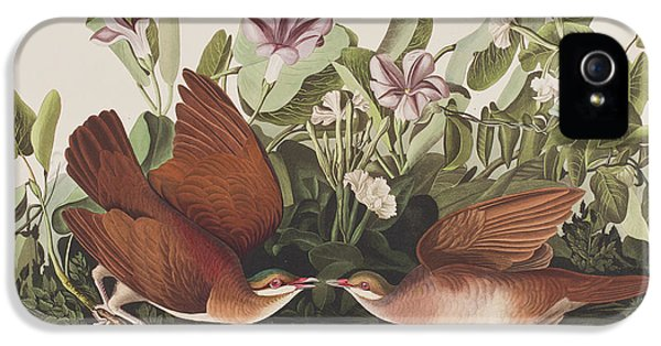 Key West Dove IPhone 5 Case by John James Audubon