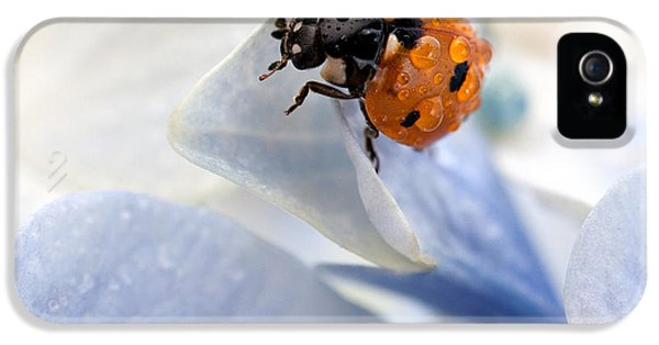 Insect iPhone 5 Case - Ladybug by Nailia Schwarz