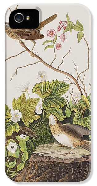 Lincoln Finch IPhone 5 Case by John James Audubon