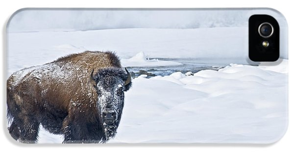 Lone Bison IPhone 5 Case by Gary Lengyel