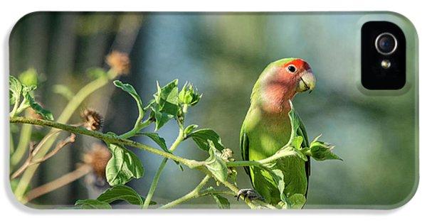 Lovely Little Lovebird  IPhone 5 Case
