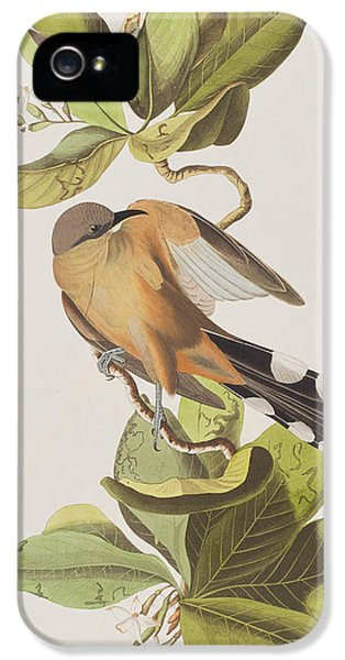 Mangrove Cuckoo IPhone 5 Case by John James Audubon