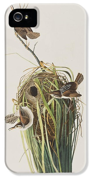 Marsh Wren  IPhone 5 Case by John James Audubon