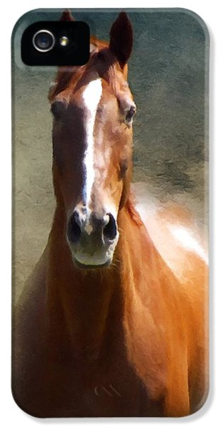 iPhone 5 Case - Misty In The Moonlight P D P by David Dehner