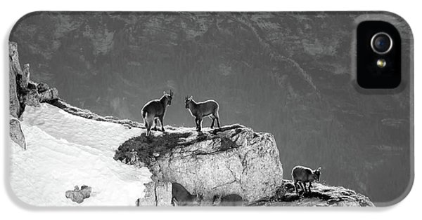 Mountain Goats IPhone 5 Case by Medina Rosa
