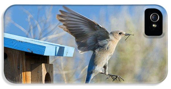 Nest Builder IPhone 5 Case by Mike Dawson
