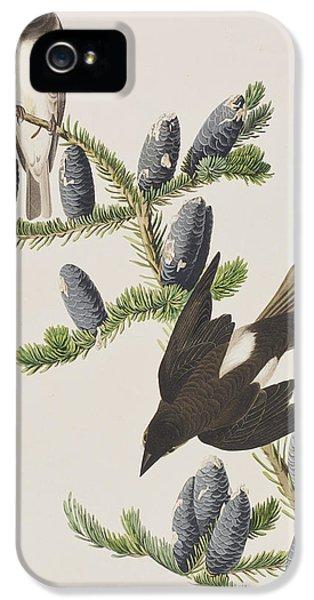 Olive Sided Flycatcher IPhone 5 Case by John James Audubon