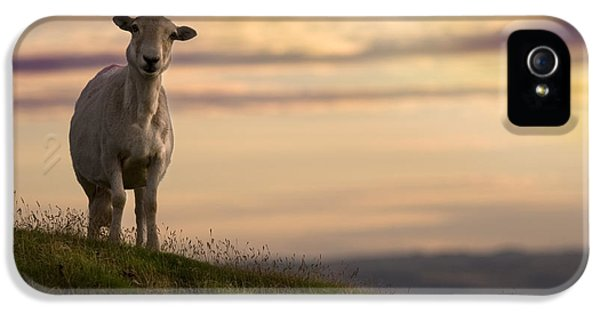 Sheep iPhone 5 Case - On The Top Of The World by Angel Ciesniarska