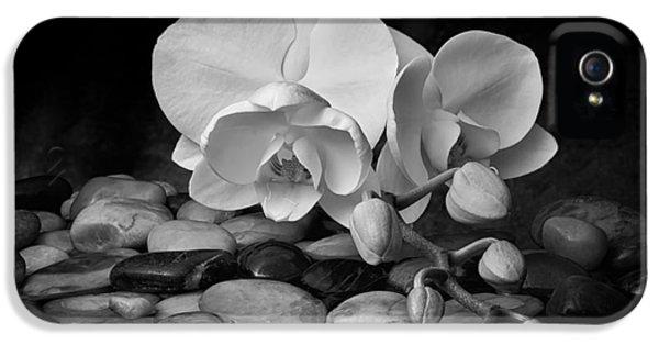 Orchid - Sensuous Virtue IPhone 5 Case by Tom Mc Nemar