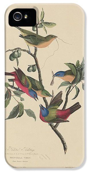 Bunting iPhone 5 Case - Painted Bunting by Dreyer Wildlife Print Collections