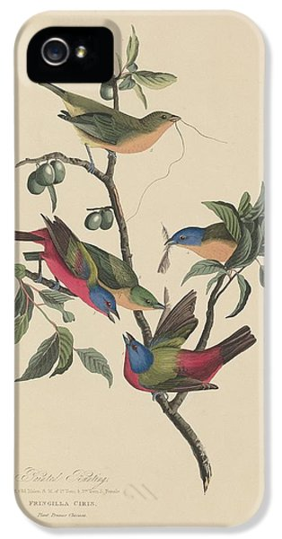 Painted Bunting IPhone 5 Case by Rob Dreyer