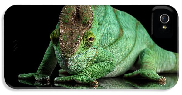 Parson Chameleon, Calumma Parsoni Orange Eye On Black IPhone 5 Case by Sergey Taran