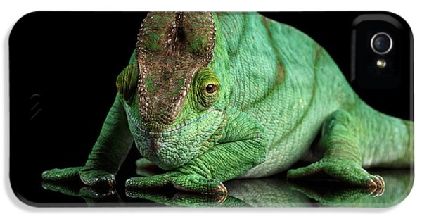 Parson Chameleon, Calumma Parsoni Orange Eye On Black IPhone 5 Case by Sergey Taran