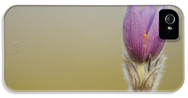 Pasque Flower IPhone 5 Case by David & Micha Sheldon