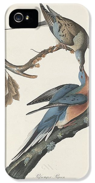 Passenger Pigeon IPhone 5 / 5s Case by Anton Oreshkin