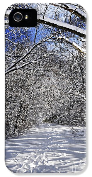 Path In Winter Forest IPhone 5 Case by Elena Elisseeva