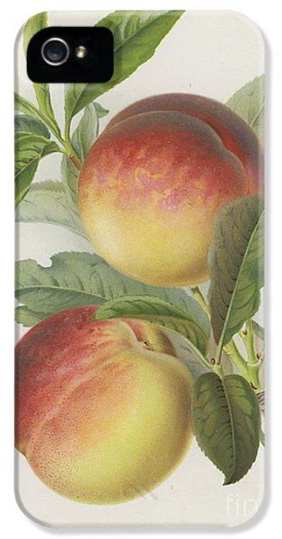 Peaches IPhone 5 Case