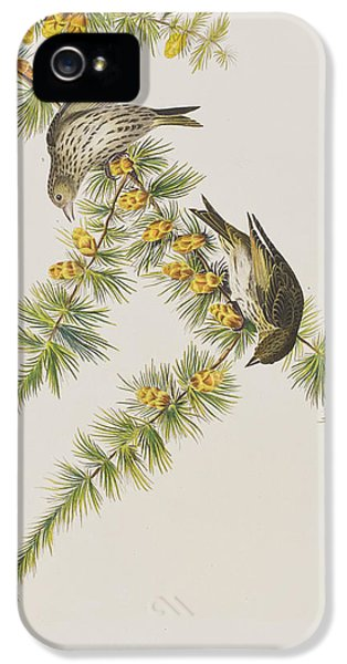 Pine Finch IPhone 5 Case by John James Audubon