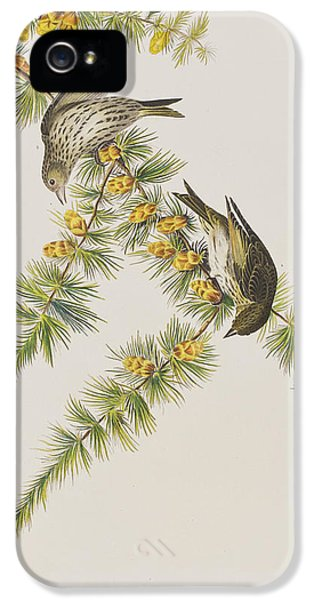 Pine Finch IPhone 5 / 5s Case by John James Audubon