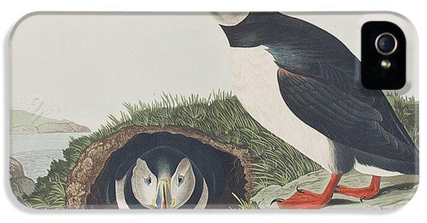Puffin IPhone 5 Case by John James Audubon