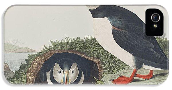 Puffin IPhone 5 / 5s Case by John James Audubon