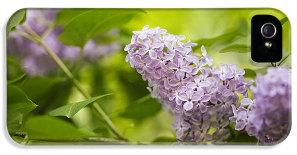 Purple Lilac IPhone 5 Case by Nailia Schwarz