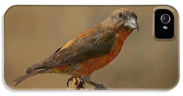 Red Crossbill IPhone 5 Case by Doug Herr