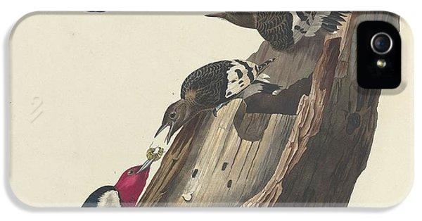 Red-headed Woodpecker IPhone 5 Case
