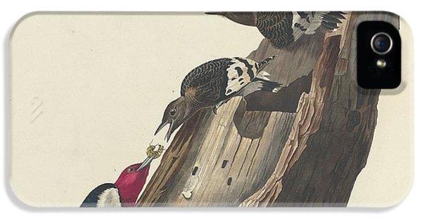 Red-headed Woodpecker IPhone 5 / 5s Case by Anton Oreshkin