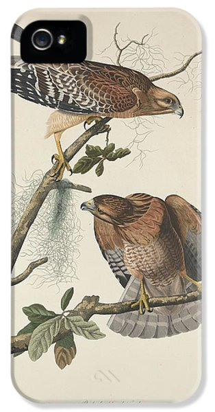 Red Shouldered Hawk IPhone 5 Case