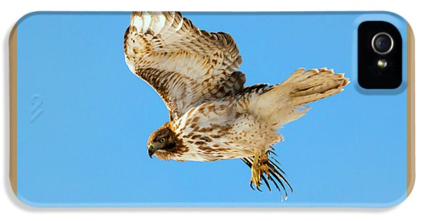 Red-tail Flight IPhone 5 Case by Mike Dawson